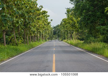 Roadway In Forest At Countryside