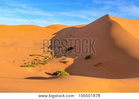 Africa, Morocco - view of an oasis in Erg Chebbi Dunes - Sahara Desert
