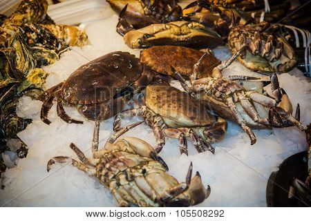 Fresh marine crabs on ice