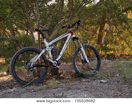 Mountain Bike  Riding In A Single Track