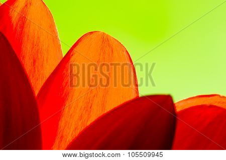 Bright Orange And Red Chrysanthemum Flower Petals