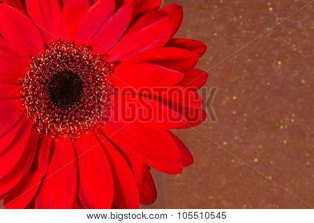 Red Chrysanthemum Flower With Orange Speckle Background