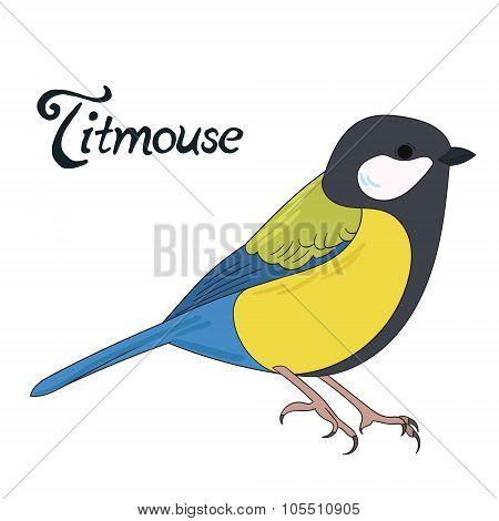 Bird titmouse vector illustration