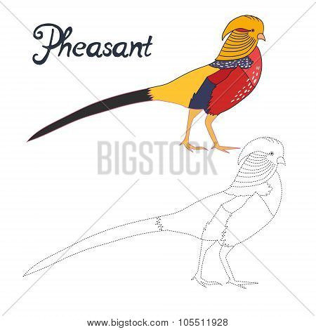 Educational game connect dots  draw pheasant bird