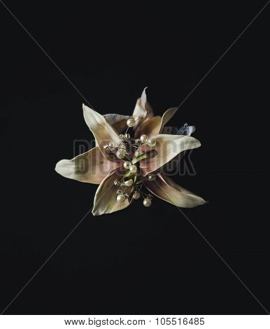 Boutonniere Flower On Black Background