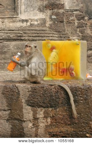 A Monkey Sits Next To A Block Of Ice Filled With Food And Flower
