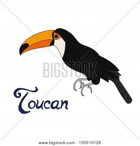 Bird toucan vector illustration