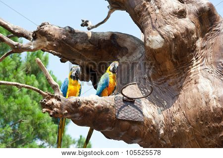 parrot on a tree