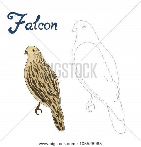 Educational game connect dots to draw falcon bird