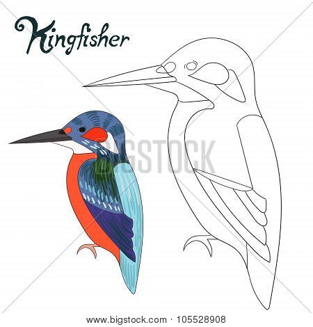 Educational game coloring book kingfisher bird