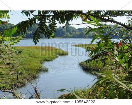 Riverside Scenery