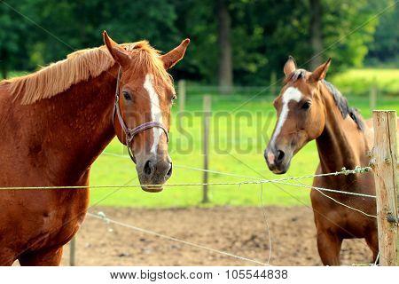 horses pose