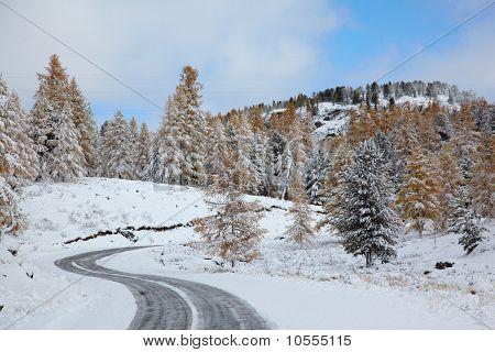 Altai Under Snow