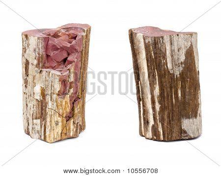 Petrified Wood, Isolated On White