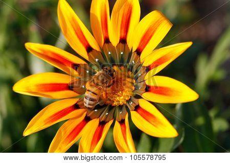 Flower close up.