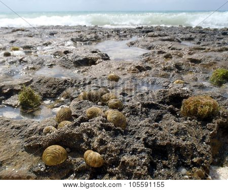 Group Of Sea Snails
