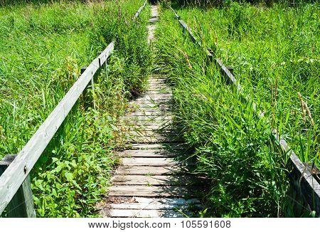Overgrown Long Wooden Boardwalk