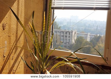 Flower And Window