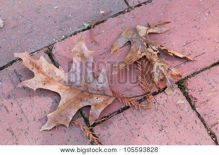 Oak leaves lying on a brick patio in autumn
