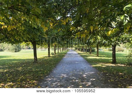 Milan: Path In The Park
