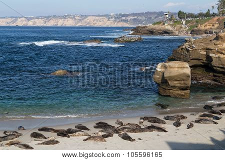 Seals In Children Pool, Point Mencinger, La  Jolla
