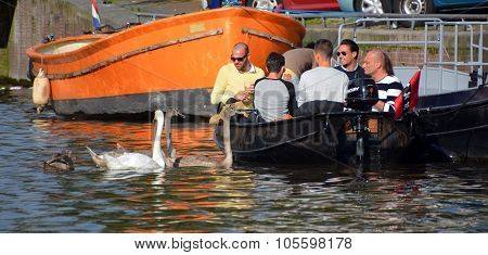 People watching friendly swans