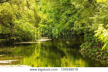 Summer Park With River Trees On The Shore