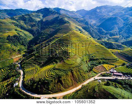 Aerial view of beautiful terraced rice field in harvest season in Mu Cang Chai, Vietnam.