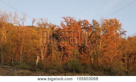 Row of Autumn Trees in Orange Sunlight.