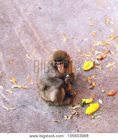 Monkey Sitting Next To His Food