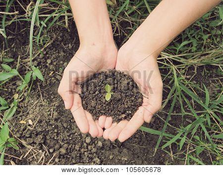 Vintage Style,soil- Handful,female Hands, Humus Soil
