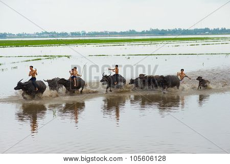 Children in rural areas are relaxing on the back of buffalo in floating season in Dong Thap, Vietnam