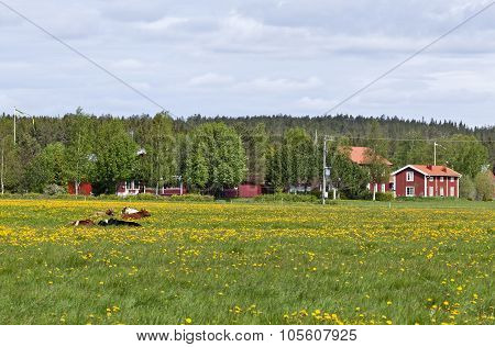 NORTH COUNTY, SWEDEN ON JUNE 12