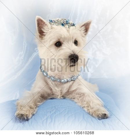 West Highland White Terrier Puppy On A Pillow