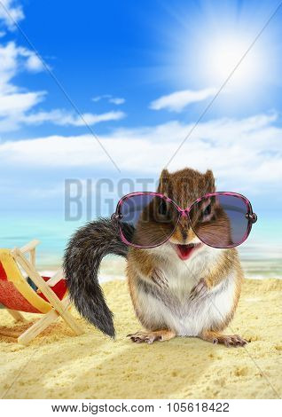 Funny Animal Chipmunk With Sunglasses On Sandy Beach