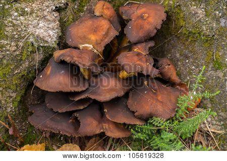 Rocks And Mushrooms