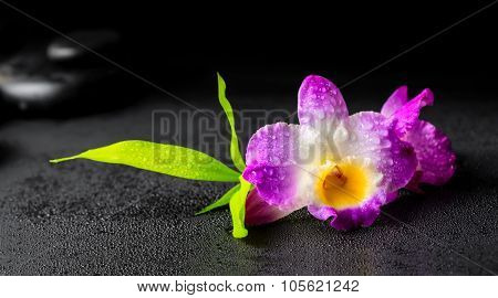 Beautiful Spa Concept Of Purple Orchid Dendrobium With Dew, Twig Bamboo And Black Zen Stones, Closeu