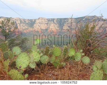 Sedona red earth and natural green cactus