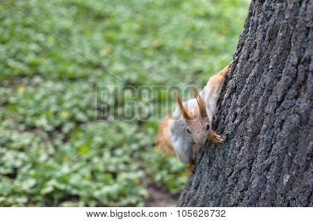 Spring Squirrel