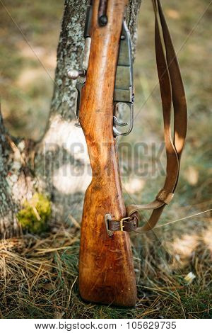 Old soviet rifle of World War II leaning against trunk of tree