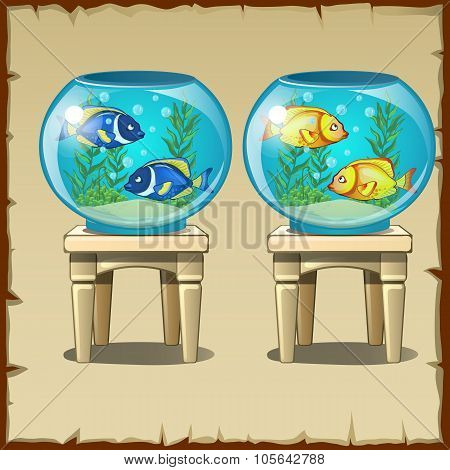 Set of two aquariums with fish