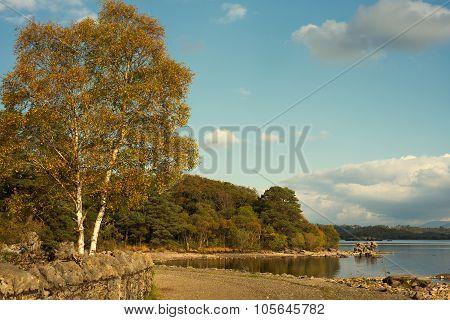 Autumn scene by a lake
