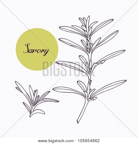 Hand drawn savory branch with leves isolated on white