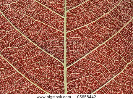 Dry Leaf Texture On Red Background
