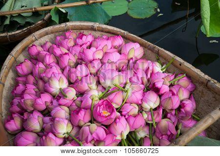 A boat of lotus flower in West Lake, Hanoi, Vietnam