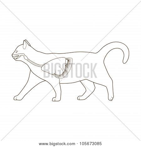 Respiratory system of the cat vector illustration