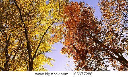 Yellow and Orange Tree Fall Foliage.