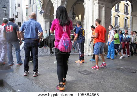 CUENCA, SPAIN - September 18, 2015: People running with bull on Plaza Mayor in Cuenca in The San Mateo holiday (local trdition). Focus on the bull, shallow DOF!