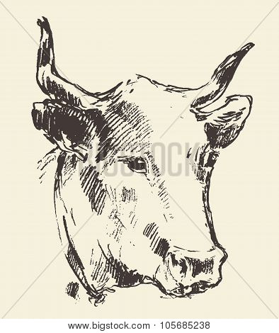 Cow head with bell dutch cattle breed drawn sketch