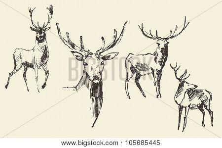 Set of deers engraving vintage hand drawn sketch